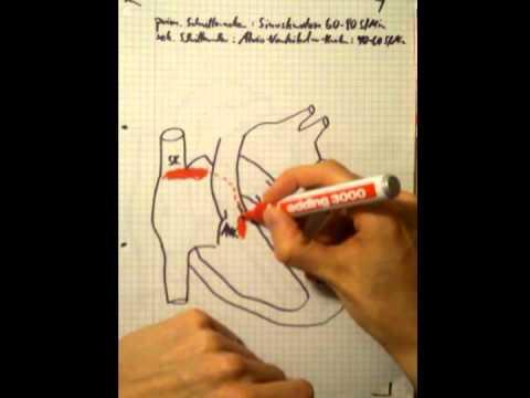 Blutdruck und die Geschwindigkeit der Ablenkung