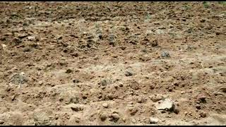 7 Acre Farm Land for Sale in Amangal, Hyderabad