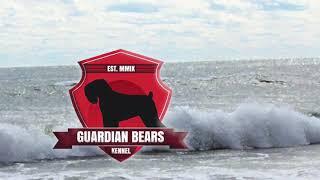 Dann können wir den beiden Mädels vom Guardian Bears Kennel , der D - Wurf auch gratulieren !