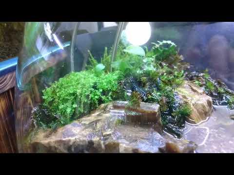 Do!aqua オーバル17 グラステラリウム2