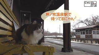 Vol.1「にゃん旅鉄道」ホームの巡回・列車のお見送り