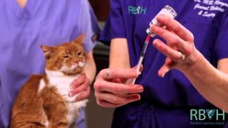 How to Give Your Pet an Injection Under the Skin