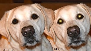 Adobe Photoshop CC 2015 | How to get rid of pet eye