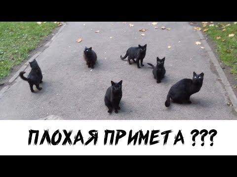 Черная кошка  Плохая примета?