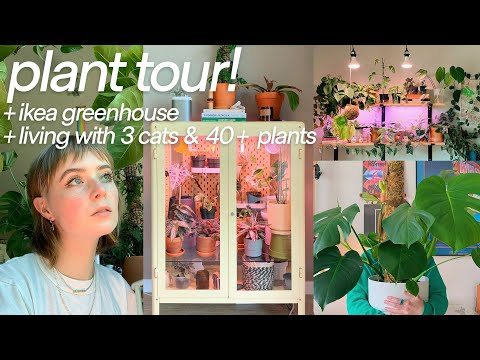 , title : 'a tour of my houseplants!