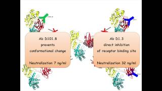 Characterizing Diphtheria Toxin Antibodies with the ProteOn™ System