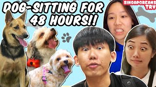 Singaporeans Try: Dog-Sitting For The First Time (48H Challenge)