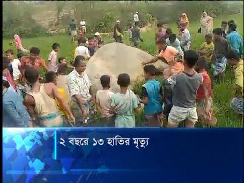 রোহিঙ্গা জনগোষ্ঠির চাপে সংকটে পড়েছে হাতির আবাসস্থল | ETV News