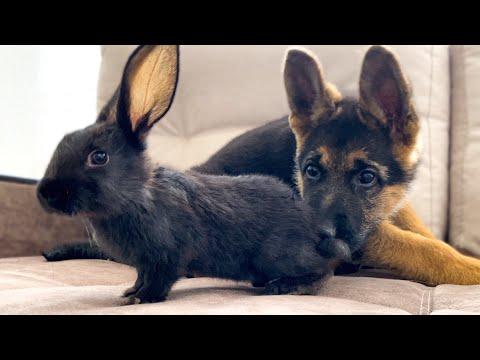 סרטון מקסים המתעד פגישה ראשונה של כלב וארנב