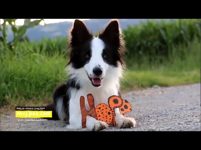 Lexy – Video natečaj 2020 – Revija Moj Pes #Lexy #MojPes