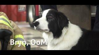 Rescue dog Bryn awarded PDSA Order of Merit