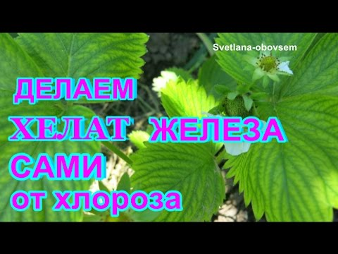 ДЕЛАЕМ САМИ  ХЕЛАТ ЖЕЛЕЗА Лечим растения от ХЛОРОЗА .WE MAKE THEMSELVES CHELATE