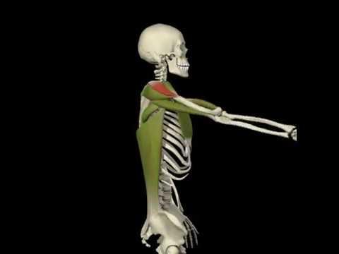 Tintura para el tratamiento de la articulación del codo