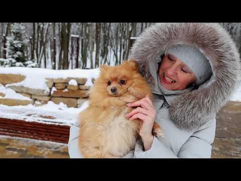 Зимние прогулки в Платоновском парке
