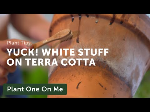 What's the White Buildup on Terracotta Planter Pots?