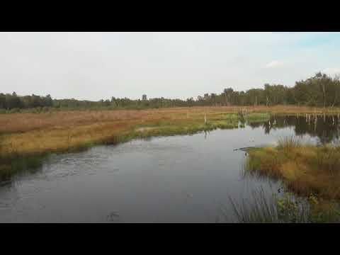 Landschaft Wittmoor