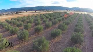 OE Oleoext GEOfood certified olive oil from Villuercas UNESCO Global Geopark