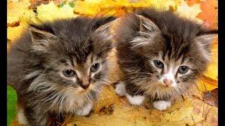 Подборка приколов 2014. Очаровательные котята. Funny Cats Compilation 2014