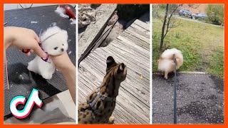 Try Not to Grin While Watching Funny Animal Videos   Adorable Animals Compilation