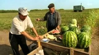 Podsosnowo 0004  документальный фильм про немецкий район включая Подсосново TV 2012 08 10