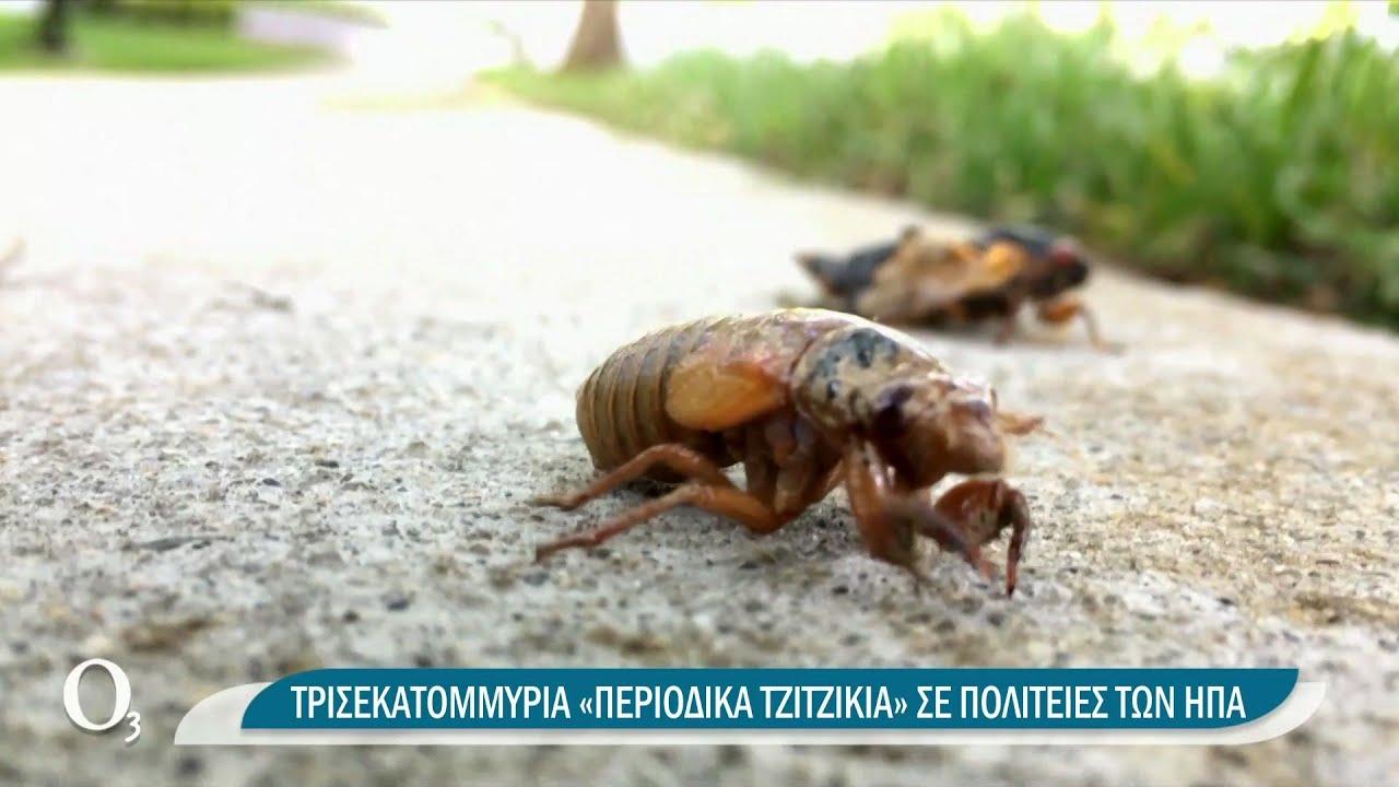 Ποιες αράχνες και ποια φίδια είναι επικίνδυνα | 14/06/2021 | ΕΡΤ