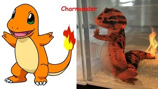Download Youtube: Pokemon in Real Life | Pokemon Characters as Monsters 2017