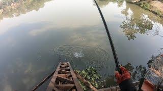 ตกปลาตะเพียนทอง ฝูงก็ใหญ่แต่ทำไมตกยากจัง