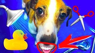 СОБАКА ПЕРВЫЙ РАЗ У ГРУМЕРА - ЧИСТКА ЗУБОВ, КУПАНИЕ СОБАКИ | УХОД ЗА СОБАКОЙ | Elli Di Pets
