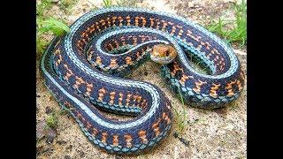 Самые Красивые Змеи В Мире !!!