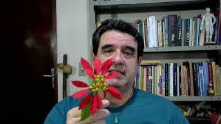 Meditação com Flores