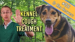 Kennel Cough Treatment in Dogs (is it really needed?) - Dog Health Vet Advice