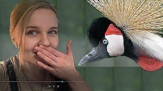 От скворца и до страуса. Парк Птиц Воробьи летом.