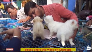 Cheap Dog Market In Kolkata Free Online Videos Best Movies Tv