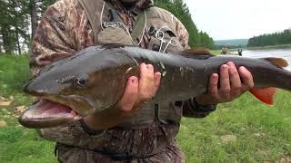 Рыбалка на тайменя и щуку на реках Якутии ЧАСТЬ 2 Щука на спиннинг.