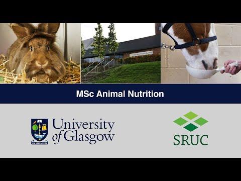 Animal Nutrition - MSc/PGDip/PGCert