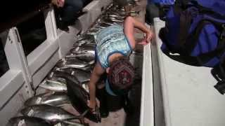Tuna Fishing Video on the Prowler out of Fisherman's Landing San Diego, CA