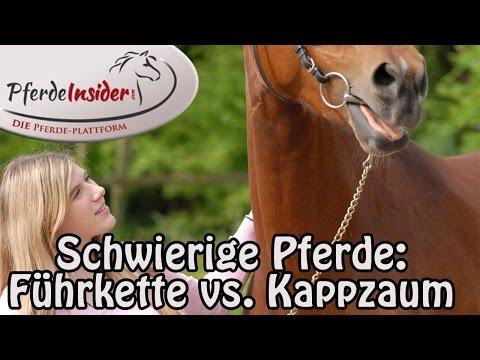 Führketten, Kappzaum & Co. - Was ist die richtige Ausrüstung bei schwierigen Pferden?