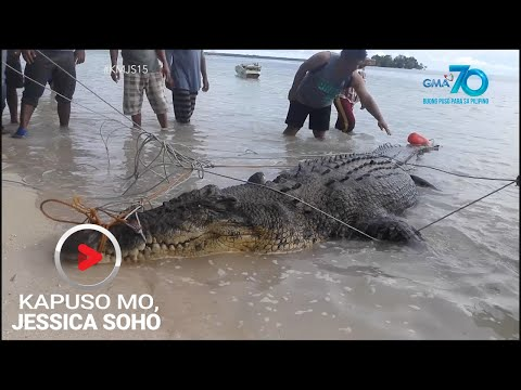 [GMA]  Kapuso Mo, Jessica Soho: Dambuhalang buwaya, nahuli sa Simunul, Tawi-tawi!