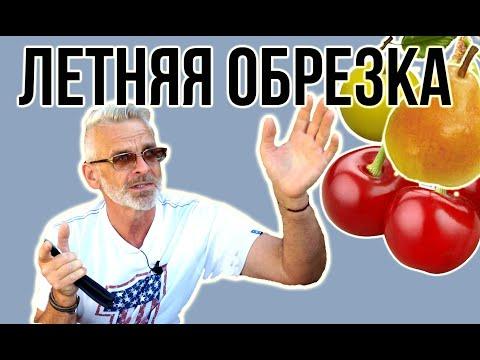 ЛЕТНЯЯ ОБРЕЗКА плодовых деревьев / Как обрезать летом / Игорь Билевич