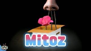 [약고어주의/성장] Mitoz : 아니 이거.. 고어물이야?