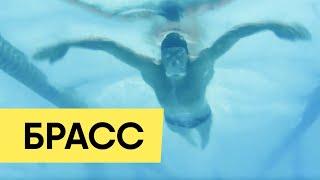 Техника плавания брассом для начинающих