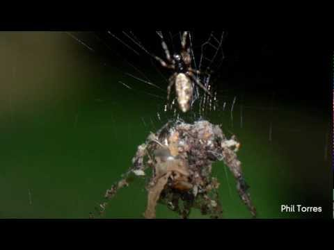 Labanan laban sa mga bituka parasites