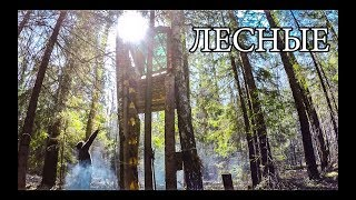 ДОМ НА ДЕРЕВЕ ПОСЛЕ СУРОВОЙ ЗИМЫ | Bushcraft Tree Shelter