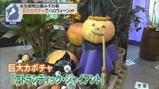 10月13日 びわ湖放送ニュース