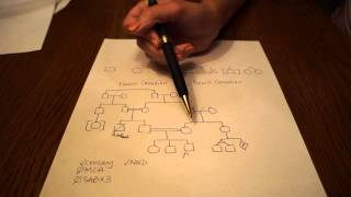 How To Draw A Pedigree