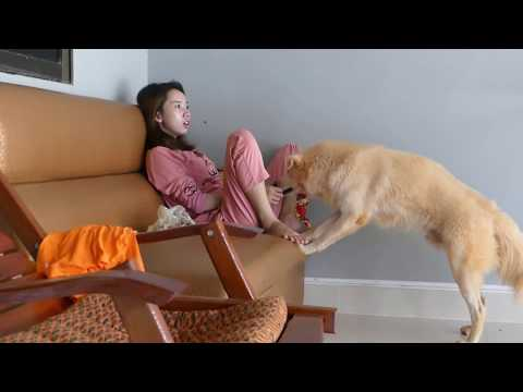Download LOVELY SMART GIRL PLAYING BABY CUTE DOGS AT HOME HOW TO PLAY WITH DOG & FEED BABY DOGS #4 HD Mp4 3GP Video and MP3