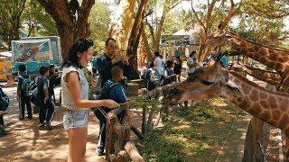 Зоопарк в Паттайе. Открытый зоопарк Кхао Кхео. Встреча с жирафами./ Khao Kheow Open Zoo Pattaya