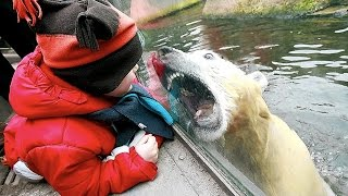 Zoo Animal Attacks ★ When Dangerous Animals Dont Know What Glass Is Funny Pets