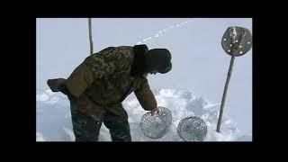 Как сделать мордушку для ловли ондатр