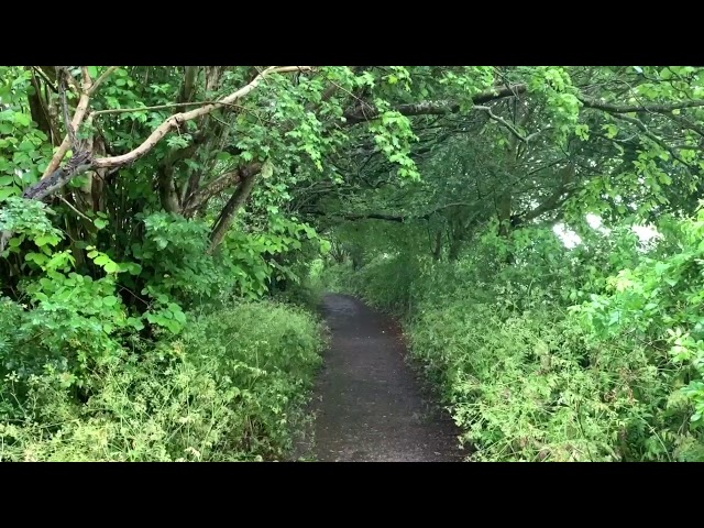 Rainy Day Path in Glastonbury   Gentle Rain Falling Through the Leaves   Soothing Sounds for Sleep